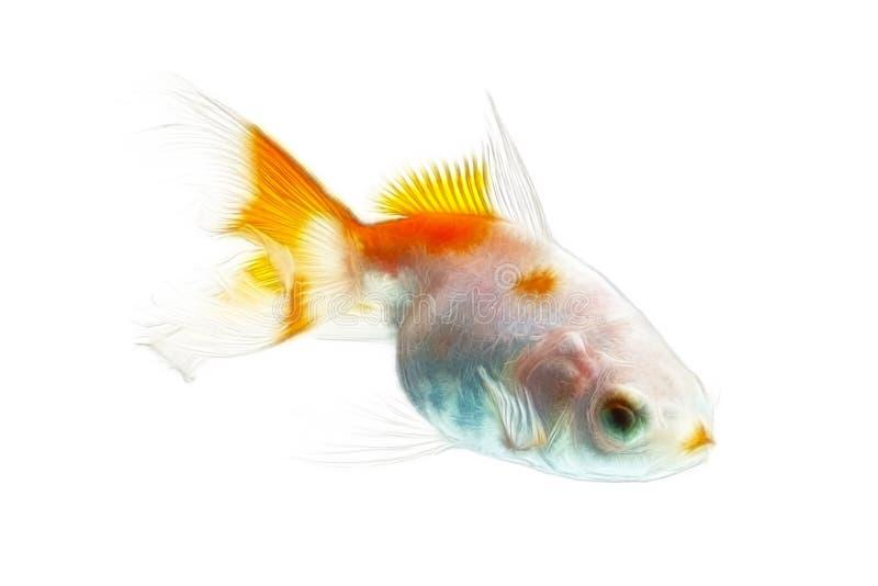 Fractales de poisson rouge d'isolement sur le blanc images stock