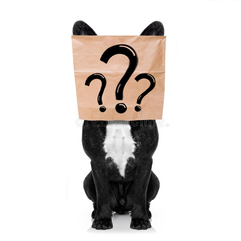 Fragezeichenhund lizenzfreies stockfoto