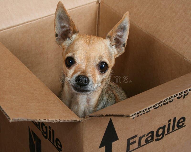 Fragile stock photos