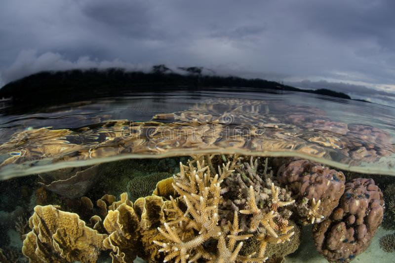 Fragile Corals and Cloudy Sky in Raja Ampat. Fragile corals grow just under the water line in Raja Ampat, Indonesia. This often-rainy, equatorial area is known stock image