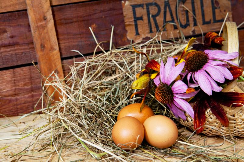 Fragile eggs with flowers - still life stock images