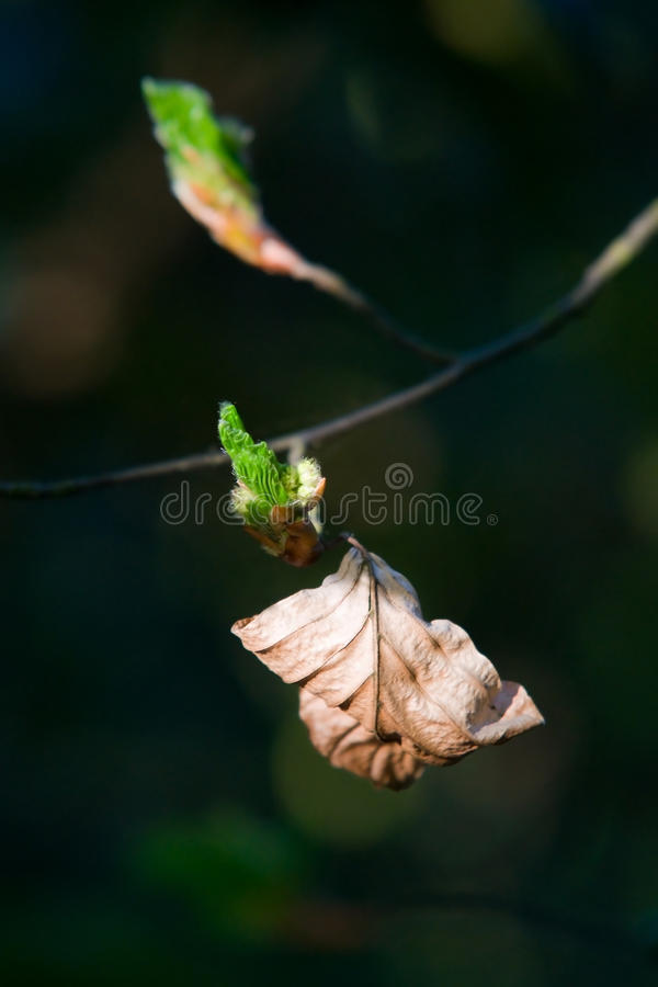 Fragile new life. Life's full circle. Abstract metaphor of old and new, shallow dof royalty free stock images