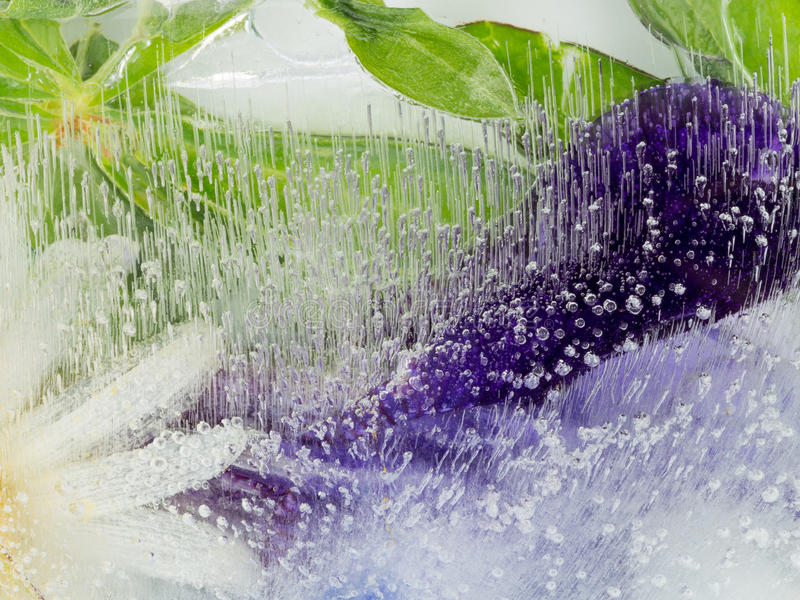 Fragile organic purple green abstraction. Bright beautiful delicate purple and green abstract organic frozen in water and a lot of air bubbles stock photo