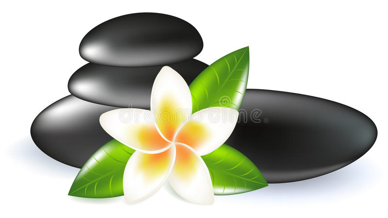 Fragipani With Leaves And Stones. Vector stock illustration