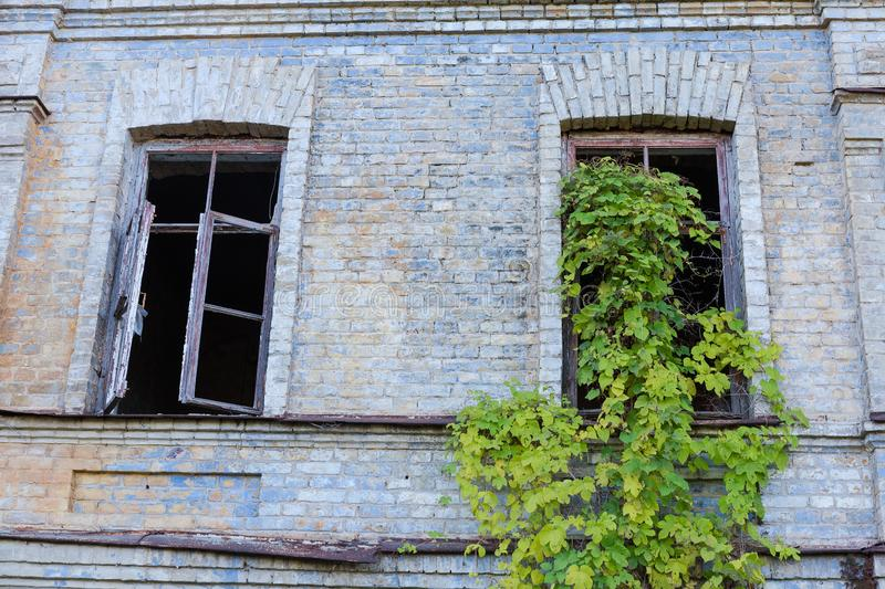 Fragment of abandoned building with climbing plants on a window. Fragment of the brick wall of abandoned building with wild climbing plants on a window opening stock image