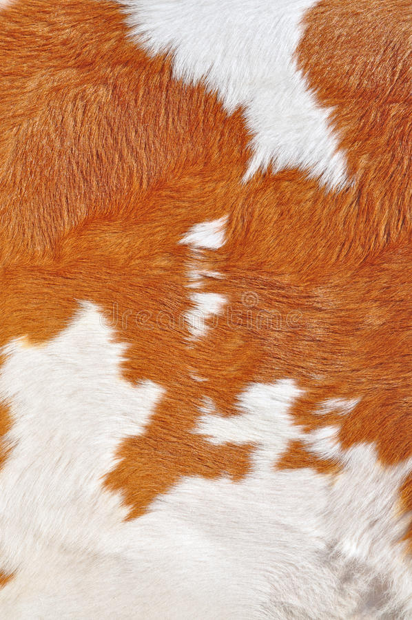 Fragment av en hud av en ko. arkivbild