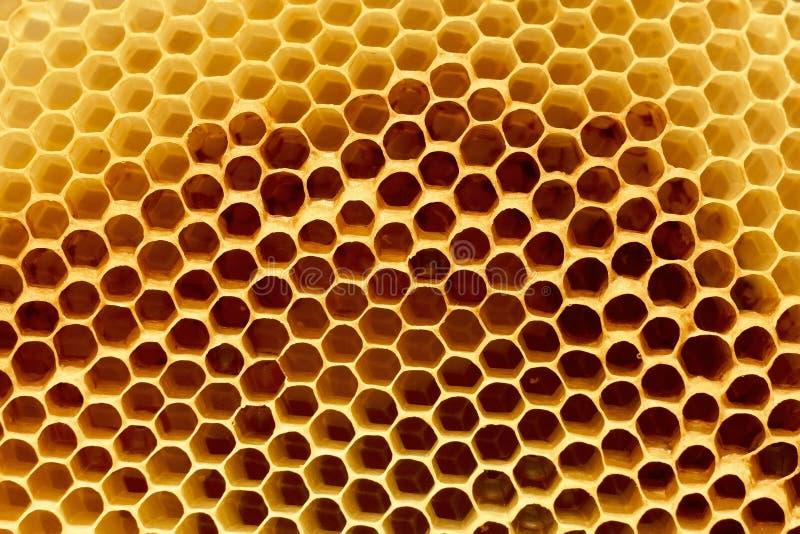 Fragment av honungskakan fotografering för bildbyråer