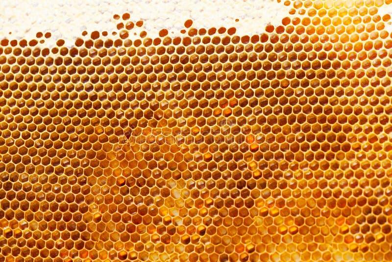 Fragment av honungskakan royaltyfria foton