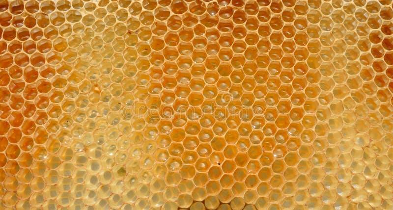 Fragment av honungskakan med fulla celler fotografering för bildbyråer