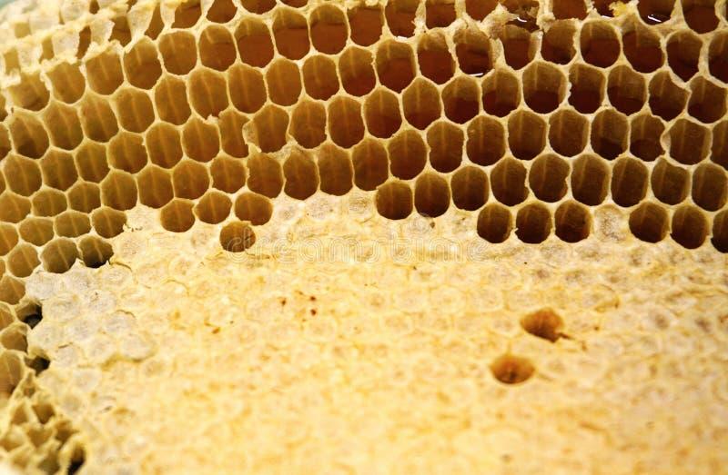 Fragment av honungskakan med fulla celler Nyligen dragen bivax för honungbihonungskaka royaltyfri foto