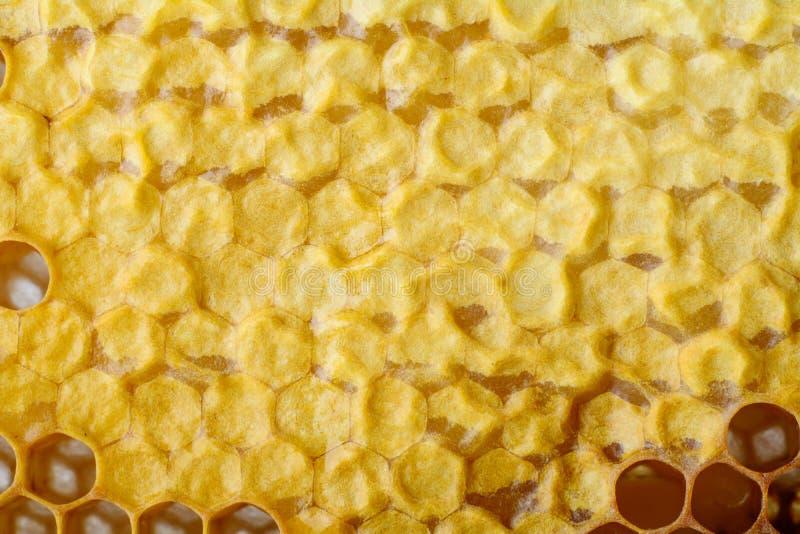 Fragment av honungskakan med fulla celler Nyligen dragen bivax för honungbihonungskaka tät honungskakabild för bakgrund upp royaltyfria bilder