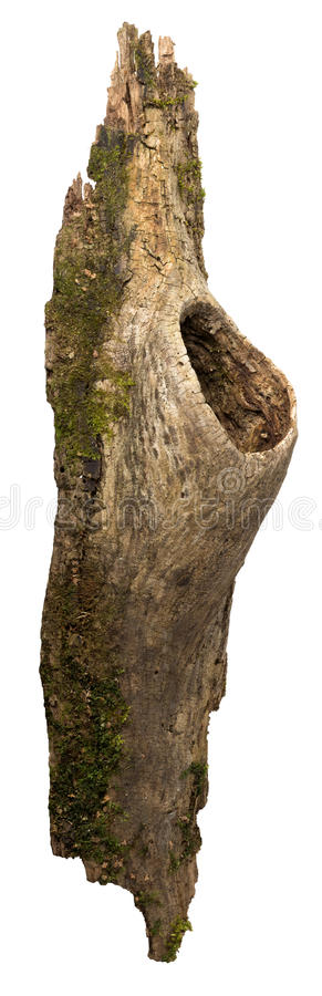 Fragment of bark with a hollow stock photos