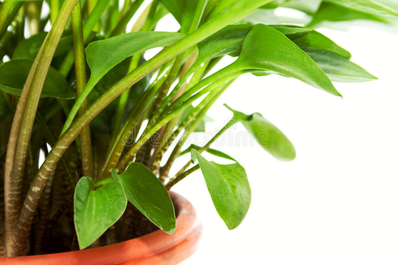 The fragment of bright green pot flower stock photo