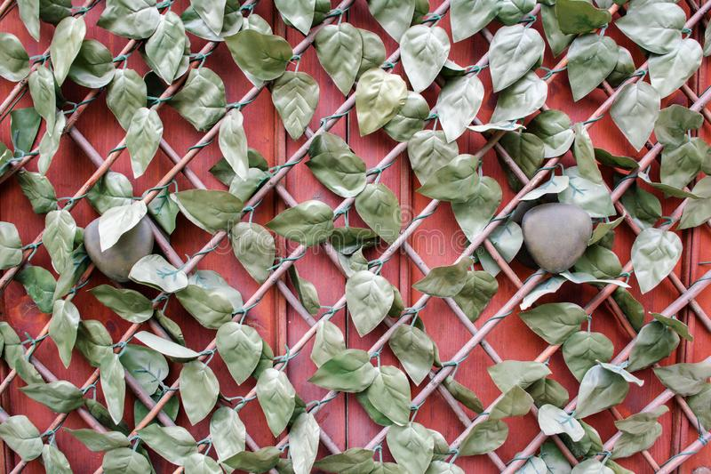 Fragment of closed wood red painted front door with brass door handles, hidden under the lattice covered with artificial ivy royalty free stock photography