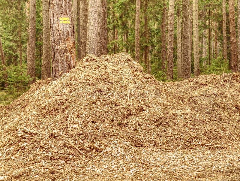 Fragment détaillé de sciure Matière première naturelle dans la forêt photo stock