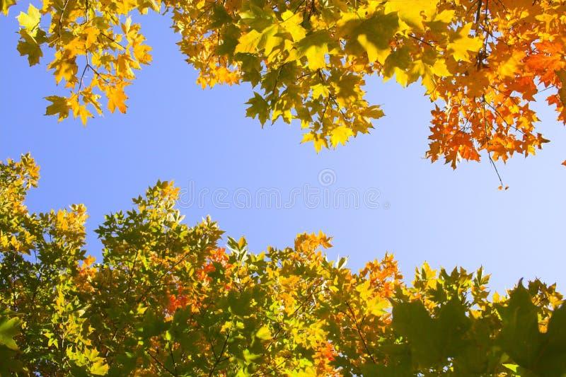 Fragment d'automne photos libres de droits
