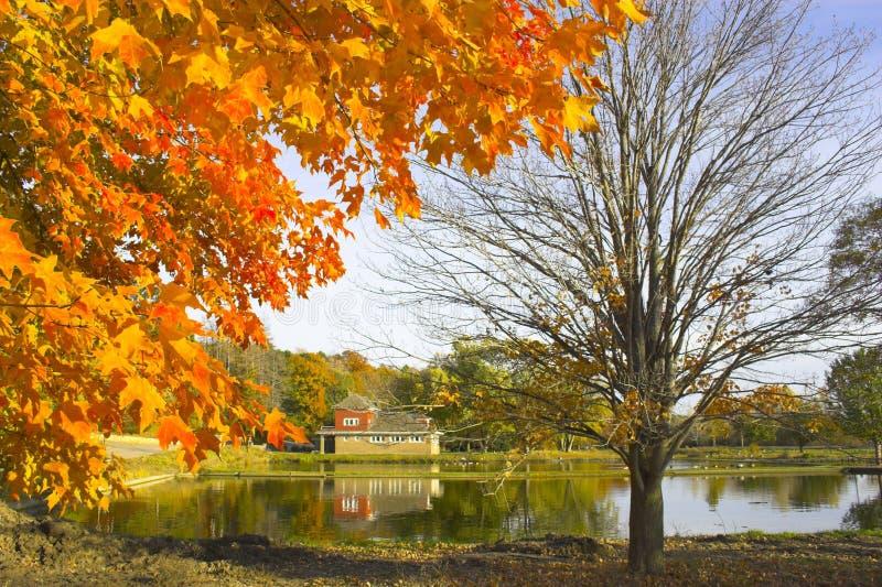 Fragment d'automne photo libre de droits