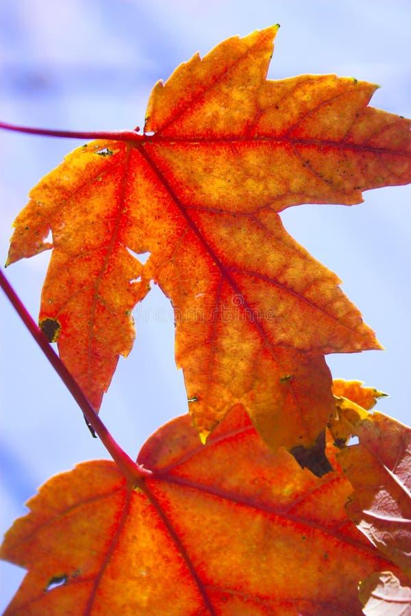 Fragment d'automne photographie stock