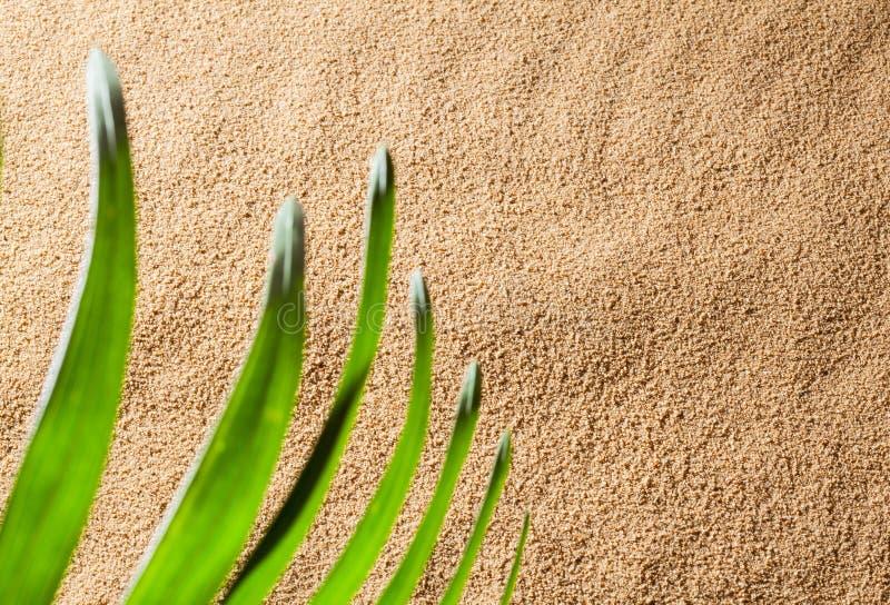 Fragment d'une plage ensoleillée images stock