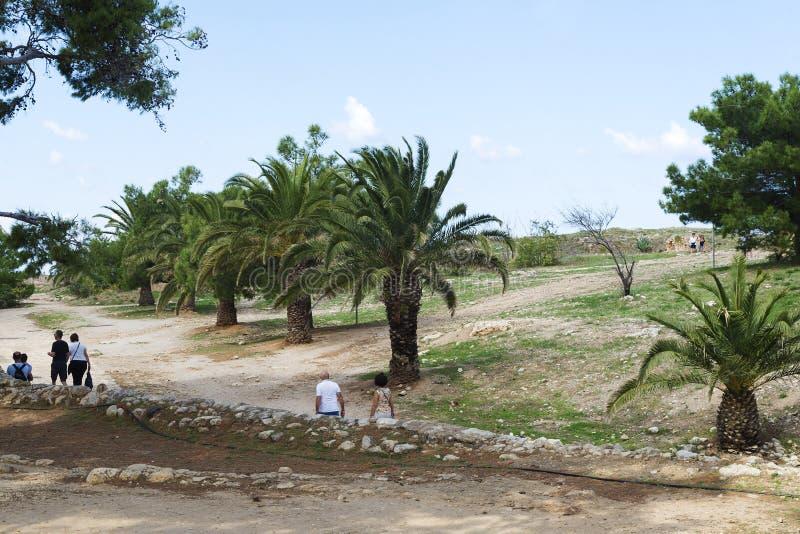 Fragment de forteresse en pierre antique avec des arbres et un palmier sur un mur dans la vieille ville photos stock