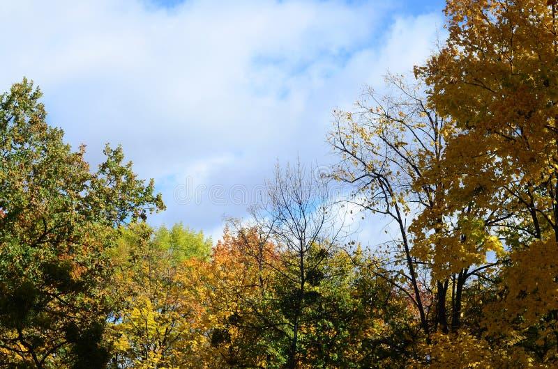 Fragment des arbres dont les feuilles changent la couleur dans le seaso d'automne photographie stock libre de droits