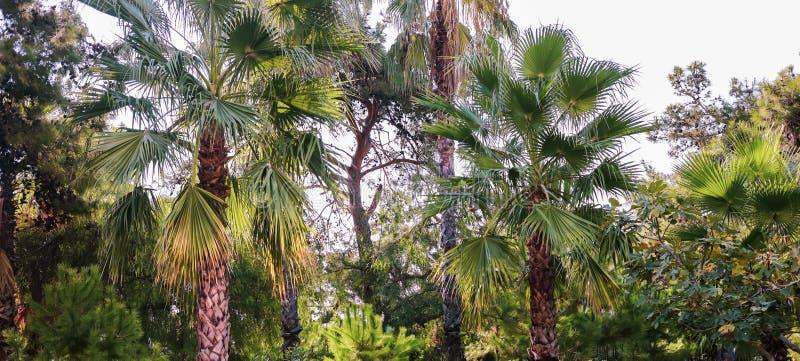 Fragment des sonnenbeschienen tropischen Waldes mit Palmen stockfotografie