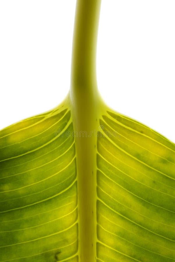 Fragment eines großen grünen Blattes stockbild