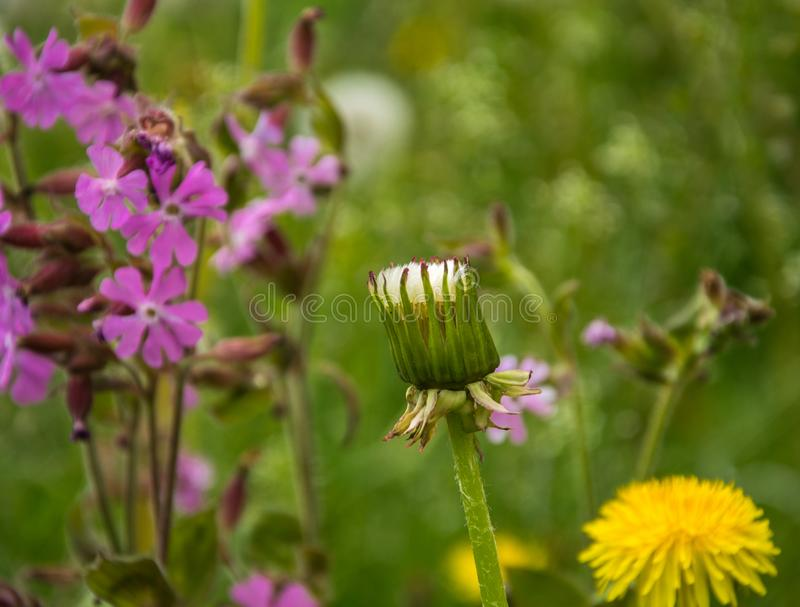 Fragment of a meadow close-up with blooming wildflowers. royalty free stock photos