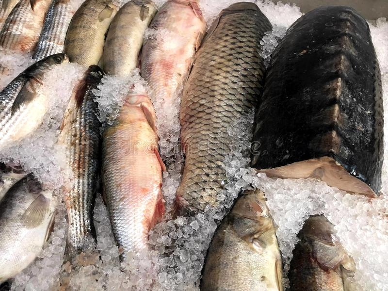 Fragment from the fish store. Catch the fish where it sails to you stock images