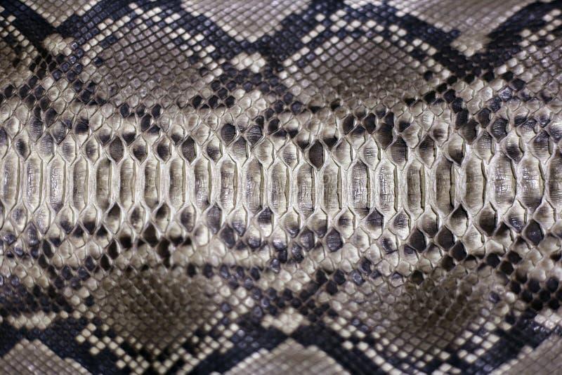 Leather snake stock image