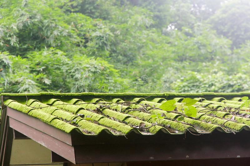 Fragment of old slate roof with moss and lichen, in countryside. stock images