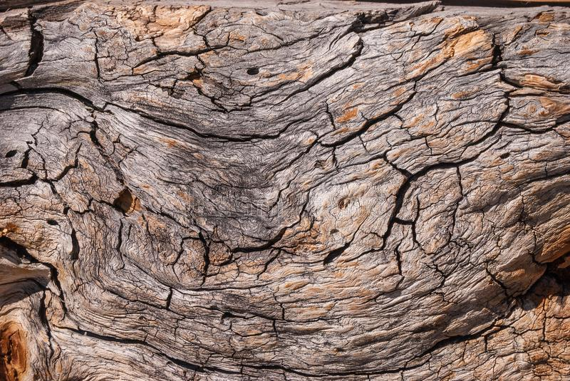 A fragment of an old tree trunk with a winding structure of wood stock images