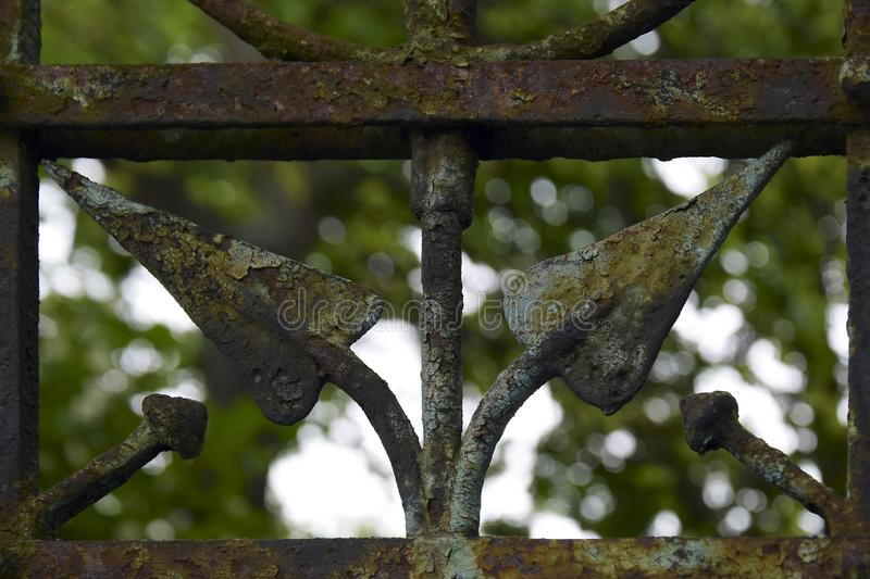Fragment of an old wrought-iron lattice against the background of green vegetation. The old paint is peeling off from the rusting metal surface of the fence stock image