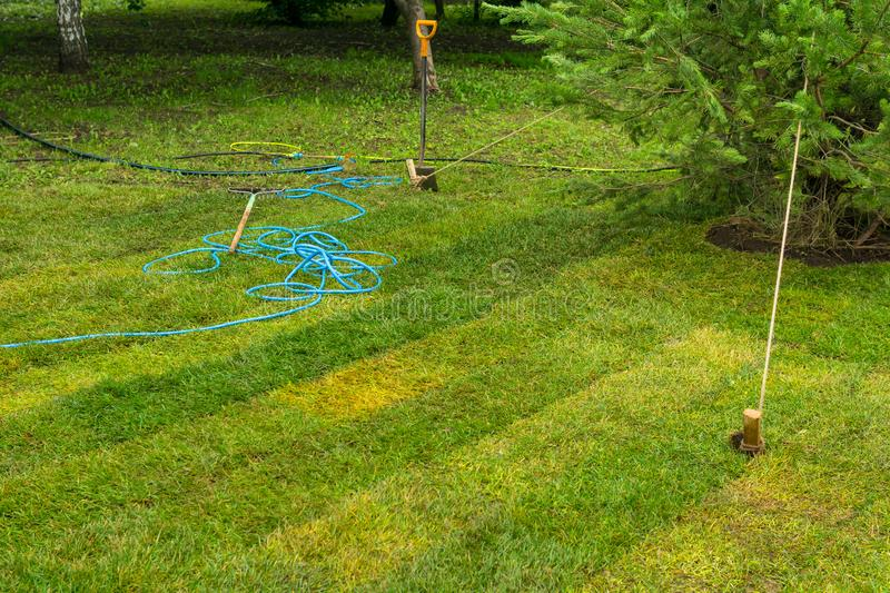 Freshly laid lawn and newly planted tree stock images