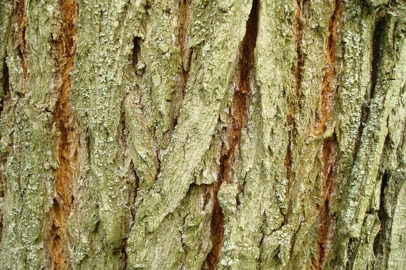 Fragment of the tree bark stock photography