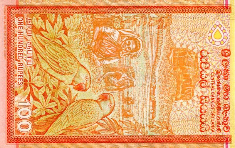 Fragment van het 100 Sri Lankaanse roepiebiljet is de nationale valuta van Sri Lanka stock fotografie