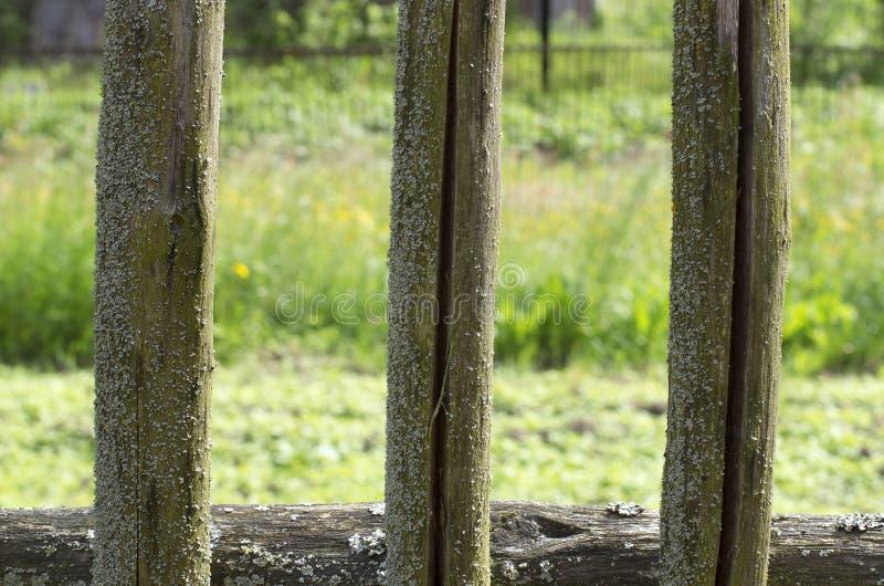 Fragment van mos-behandelde houten omheiningen van de drie pinnen stock foto's