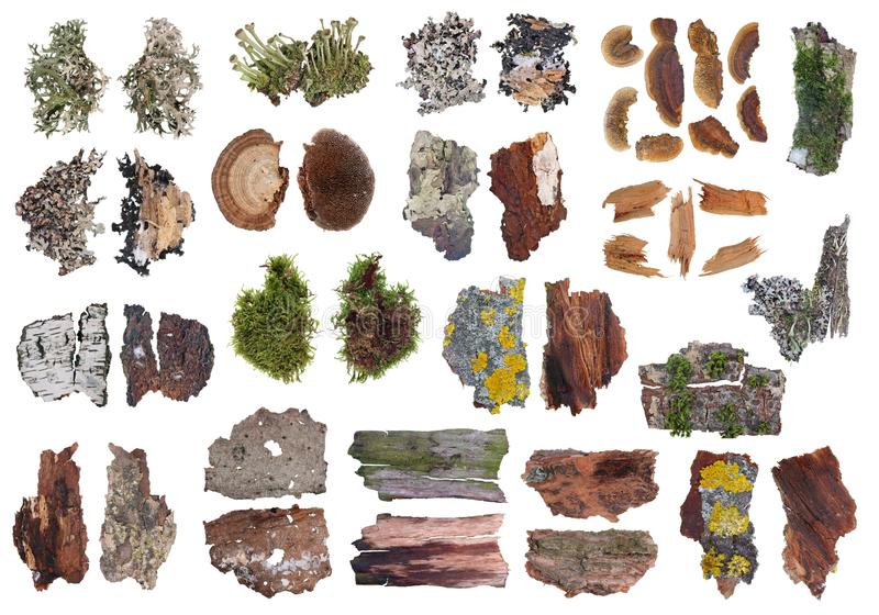 Fragmente av naturliga europeiska gråa och gula mossa- och lavväxter för skog på isolerad uppsättning för trädskäll royaltyfri fotografi