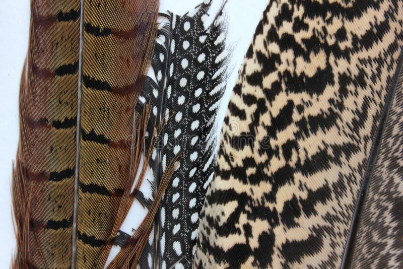 Fragmenten van veren van vogels stock fotografie