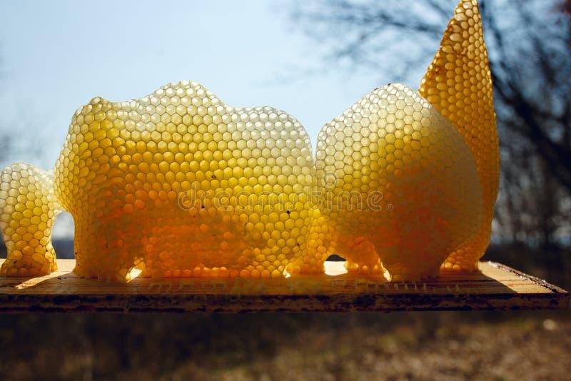 Fragmentera en guld- honungskaka i solljus Horisontalutvändigt skott royaltyfria foton