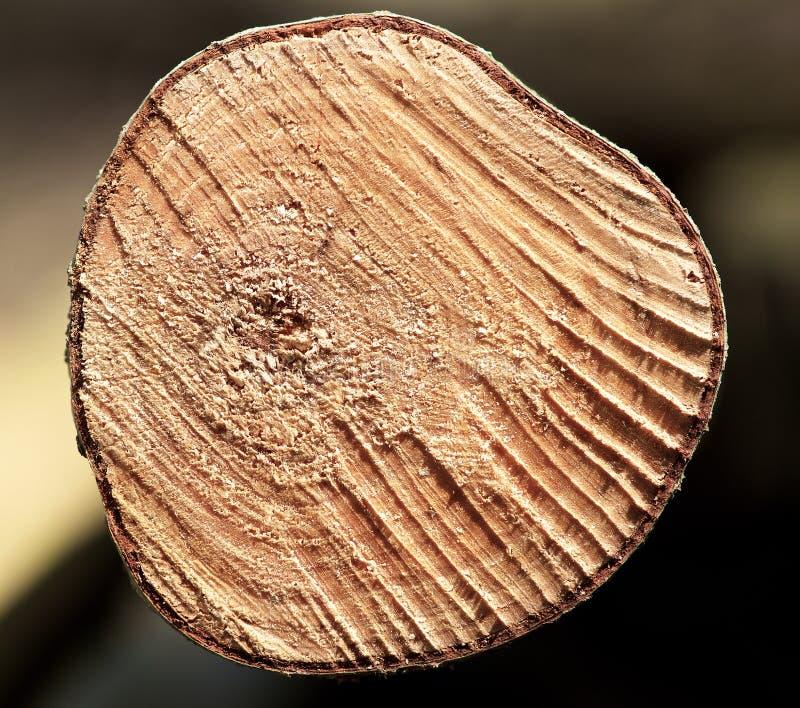 Fragmentera upp fotoet av trädslutet, trädstamslutet upp, detaljsikten av stammen, stam royaltyfri foto