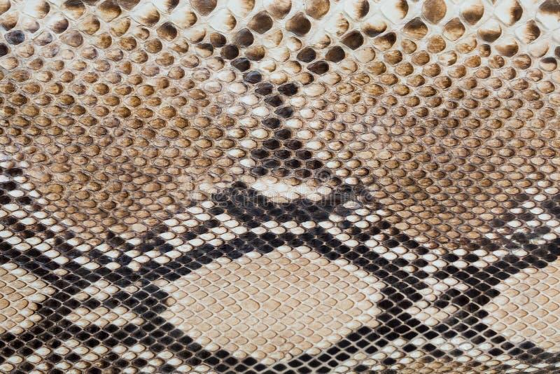 Fragmento da pele de serpente fotografia de stock