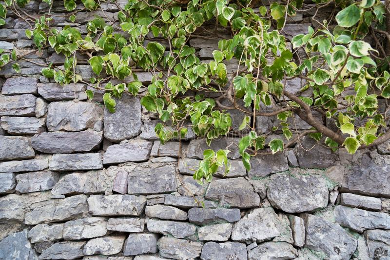 Fragmento de la pared de piedra gris vieja hecha de diversos forma y siz fotografía de archivo libre de regalías