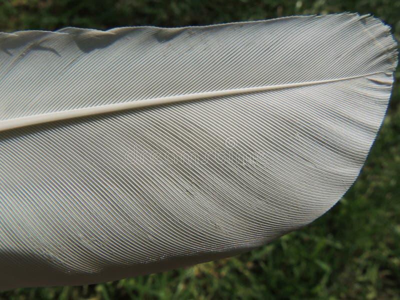 Fragmento de uma pena branca em um fundo da grama verde fotografia de stock