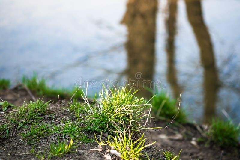 Fragmento de una orilla del arroyo de Ramenka Luz del sol de activación en la hierba joven de la primavera La naturaleza es que d imagen de archivo