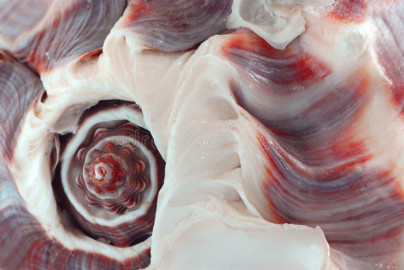 Fragmento del Seashell fotos de archivo