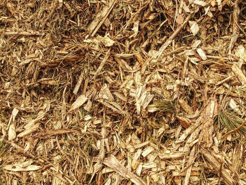 Fragmento detalhado da serragem Matéria prima natural na floresta fotos de stock royalty free