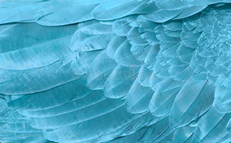 Fragmento do pássaro das asas na cor azul para o fundo Textura das penas foto de stock