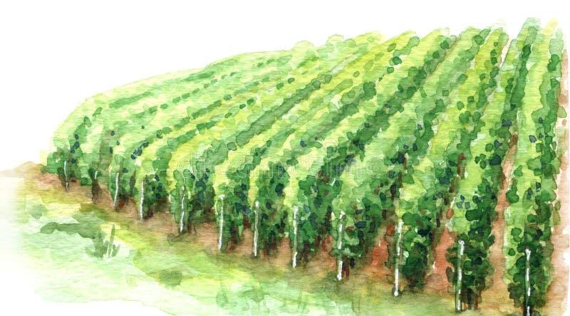 Fragmento rural da cena do esboço da aquarela do vinhedo ilustração royalty free