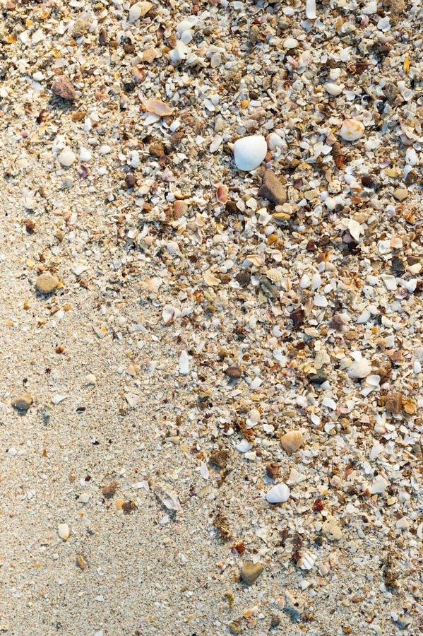 Fragments de coquillage sur le sable photographie stock libre de droits
